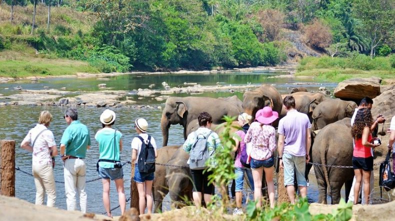 Colombo Airport To Pinnawala Elephant Orphanage