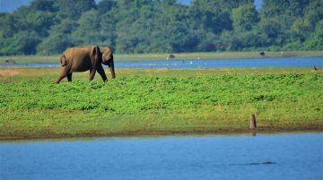 Sri Lanka Honeymoon Packages From Mumbai